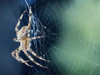 Sennik – pająk. Znaczenie snu o pająkach