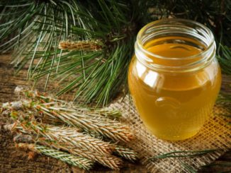 Nalewka z pedów sosny – domowy sposób na przeziębienie