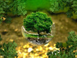 Ekologiczne kubki jednorazowe z nadrukiem