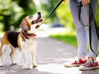 Sennik – pies. Znaczenie snu o psie